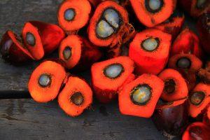 Palmöl in Kosmetik