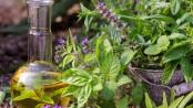 Gewinnung ätherischer Öle