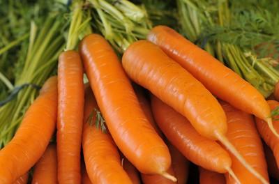 Karottensamenöl