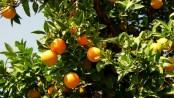 Seife selber machen Mandarinenöl