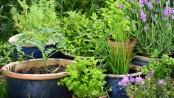 Gärtnerseife
