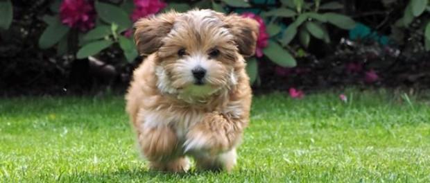Seife für Hunde selber machen