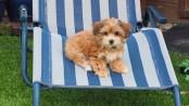 Hundeseife selber machen